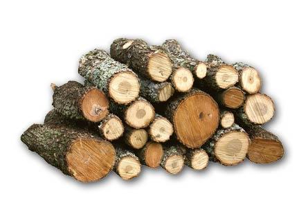 fusta